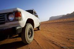 Troféu do camelo Fotos de Stock