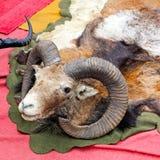 Troféu do Ram Foto de Stock Royalty Free