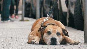 Trogen bedrövlig hund som ligger på trottoaren och den väntande ägaren Benen av likgiltigt folk för folkmassan förbigår stock video