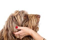 trogen hund Royaltyfria Bilder