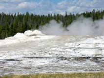 trogen nationell gammal park yellowstone Royaltyfri Bild
