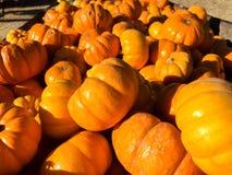Troghoogtepunt van heldere oranje pompoenen Royalty-vrije Stock Fotografie