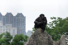 Troglodytes de Regard-Chimpanzé-casserole Images stock