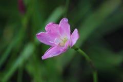 Troipical-Blume Stockfotografie
