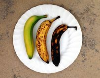 Trois étapes d'une banane Photo stock
