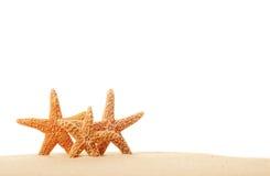 Trois étoiles de mer dans le sable Photos libres de droits