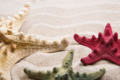 Trois étoiles de mer différentes de couleur Photo libre de droits