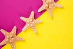 Trois étoiles de mer sur les milieux colorés de jaune et de cramoisi avec Photographie stock