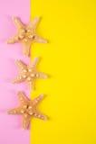 Trois étoiles de mer sur les milieux colorés de rose et de jaune avec le négatif Photo stock