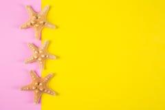 Trois étoiles de mer sur les milieux colorés de rose et de jaune avec le négatif Photographie stock libre de droits