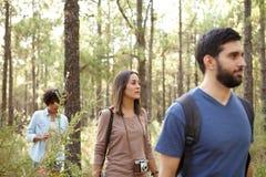 Trois amis dans une forêt de pin Photos stock