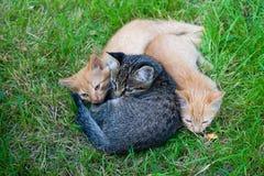Trois amis de chats Photos libres de droits