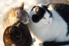Trois amis de chats Photo stock