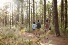 Trois amis de flânerie dans une forêt de pin Photos stock