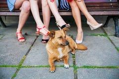 Trois amis et un chien Photographie stock