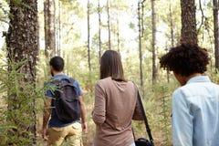 Trois amis flânant dans une plantation de pin Photographie stock