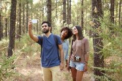 Trois amis prenant des photos de forêt de pin Photo stock