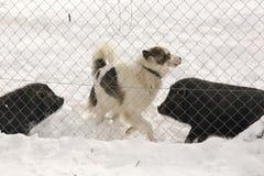 Trois amis sur la neige Photo libre de droits