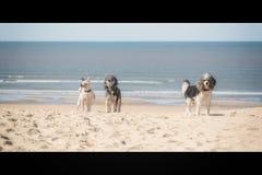 Trois amis sur la plage Photo stock