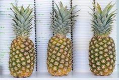 Trois ananas, très frais présenté Image libre de droits