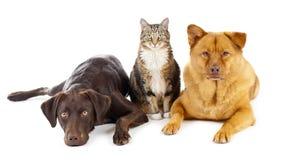 Trois animaux familiers ensemble Image libre de droits