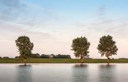 Trois arbres à travers la rivière Photos stock
