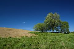 Trois arbres photo stock