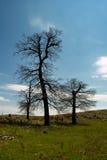 Trois arbres Photographie stock