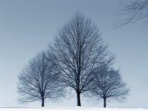 Trois arbres Images libres de droits