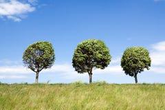 Trois arbres Photos libres de droits