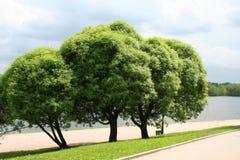 Trois arbres. Photographie stock