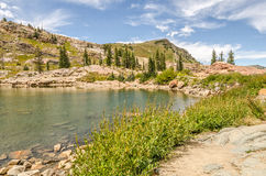 Trois arbres au lac Cecret Photographie stock libre de droits