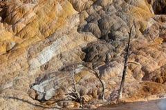Trois arbres chez Mammoth Hot Springs photo stock