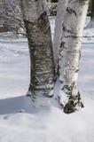Trois arbres de bouleau dans la neige Photos stock