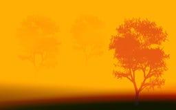 Trois arbres le matin photos libres de droits