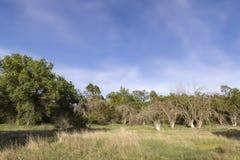 Trois arbres secs Image stock
