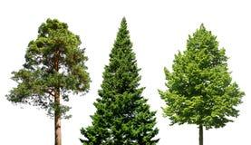 Trois arbres sur le blanc Image libre de droits