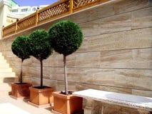 Trois arbres verts. Conception d'horizontal Photo stock