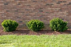 Trois arbustes verts dans une rangée photo libre de droits