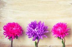 Trois asters fleurissent, rose et pourpre, sur la table en bois photographie stock