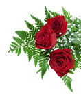Trois belles roses rouges sur une fougère poussent des feuilles avec les fleurs blanches minuscules Images stock