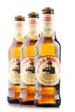 Trois bouteilles de Birra Moretti Image libre de droits