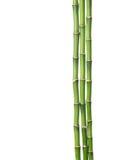 Trois branches de bambou Photos libres de droits