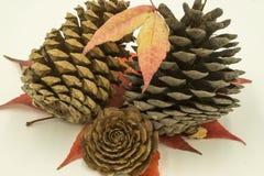 Trois cônes de pin, Photo stock