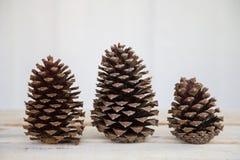 Trois cônes de pin dans une rangée Images libres de droits