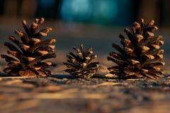 Trois cônes de pin Photos stock