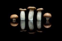Trois champignons d'huître de roi et deux champignons de paris bruns à l'OIN de rangée Image libre de droits
