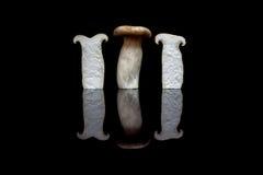 Trois champignons d'huître droits de roi, un entier et deux divisés en deux est Image libre de droits