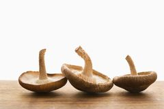 Trois champignons de couche. images libres de droits