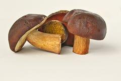 Trois champignons de couche Photo stock